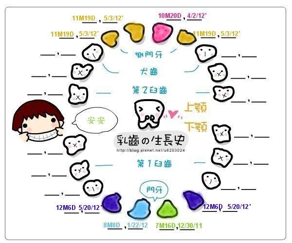 安安乳牙生長圖-[12M6D] 20120520 第七八顆牙