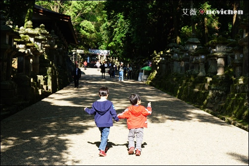 Day5_春日大社_7.JPG