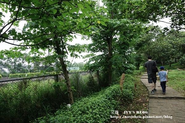 仁和步道賞桐花_5.JPG