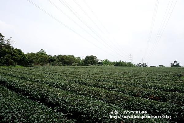 仁和步道賞桐花_12.JPG