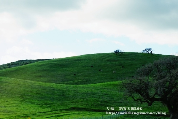 Monterey_1.JPG