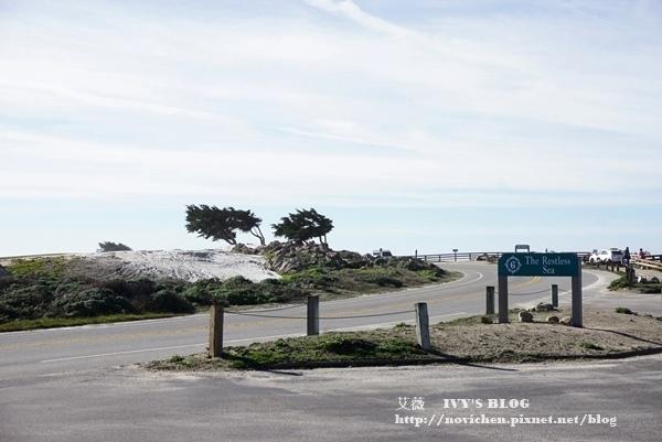 17 Mile Drive_9.JPG