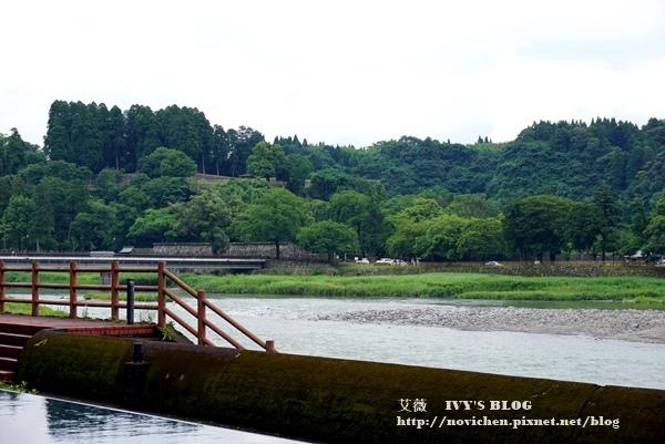 清流山水花_11.JPG