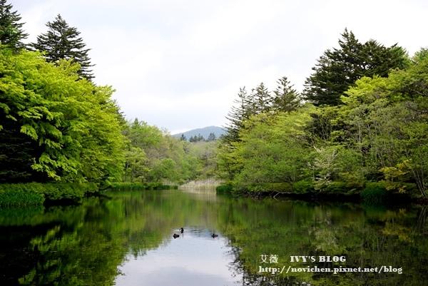 雲場池_15.JPG