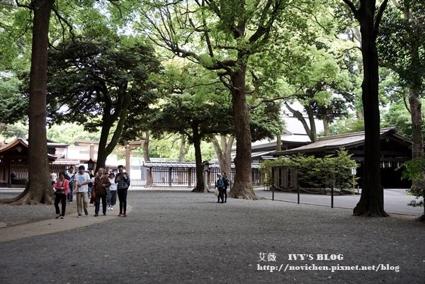 明治神宮_33.JPG