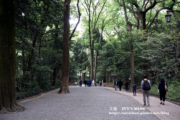 明治神宮_34.JPG