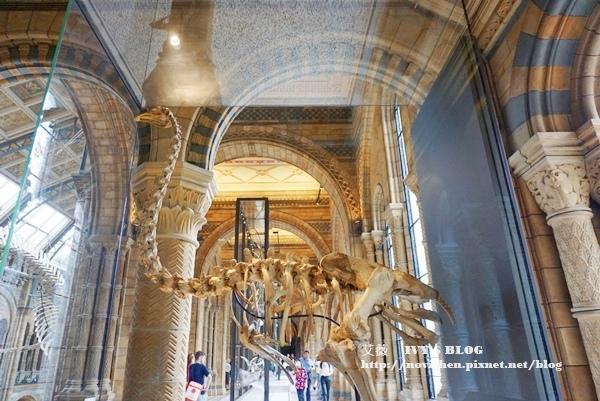 自然史博物館_7.JPG
