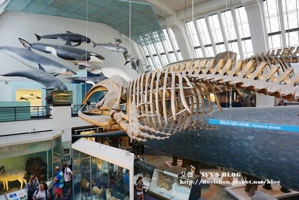 自然史博物館_10.JPG