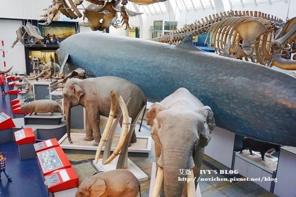 自然史博物館_11.JPG