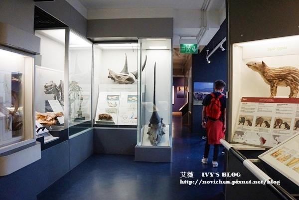 自然史博物館_17.JPG