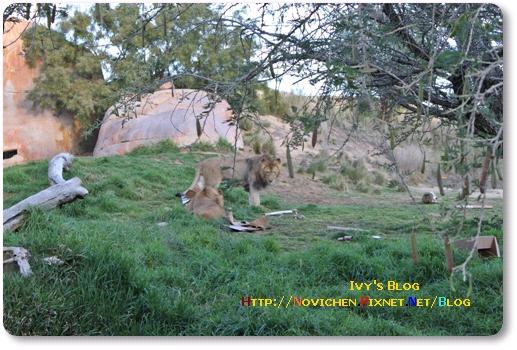 [16M5W] 1219 SD Wild Zoo_7.JPG