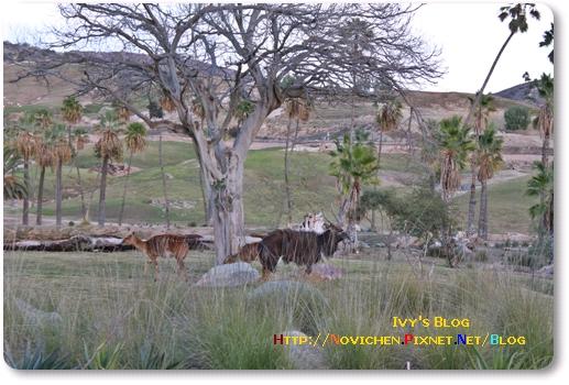 [16M5W] 1219 SD Wild Zoo_11.JPG