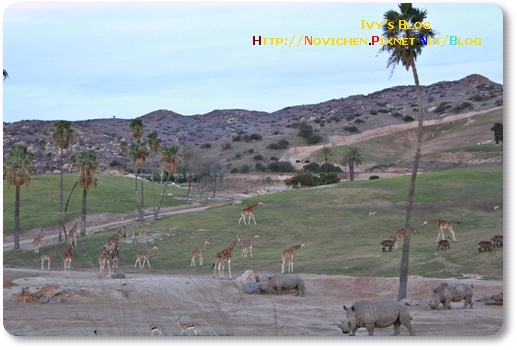 [16M5W] 1219 SD Wild Zoo_12.JPG