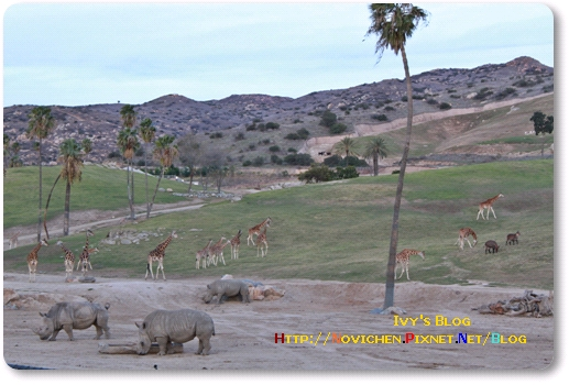[16M5W] 1219 SD Wild Zoo_14.JPG