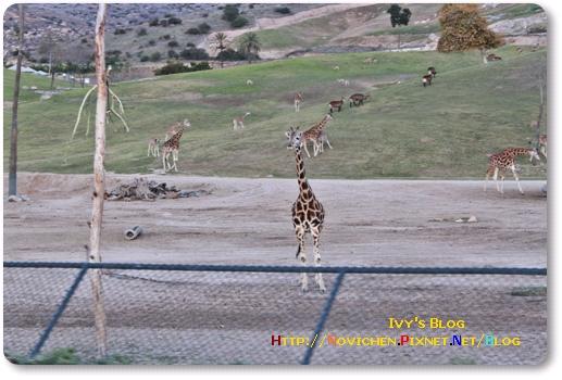 [16M5W] 1219 SD Wild Zoo_15.JPG