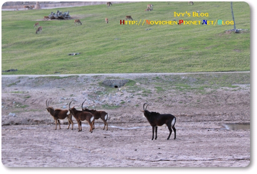 [16M5W] 1219 SD Wild Zoo_18.JPG