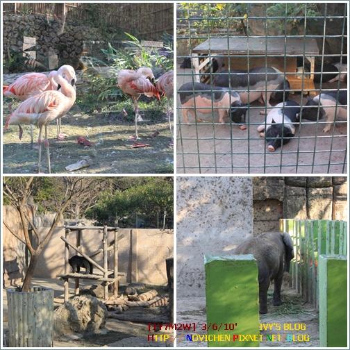 [1Y7M2W] 0306 壽山動物園_3.JPG