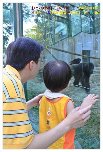[1Y7M2W] 0306 壽山動物園_5.JPG