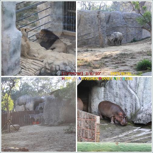 [1Y7M2W] 0306 壽山動物園_6.JPG