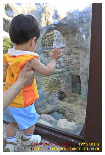[1Y7M2W] 0306 壽山動物園_7.JPG