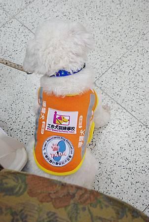 導盲犬、導聾犬傻傻分不清楚--導聾犬2.jpg
