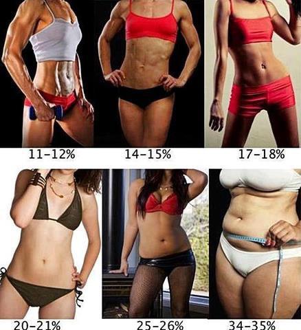女生體脂肪圖表