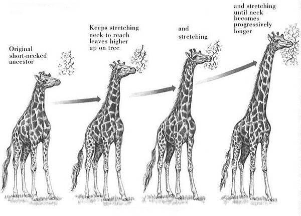 lamarck_giraffe2.jpg