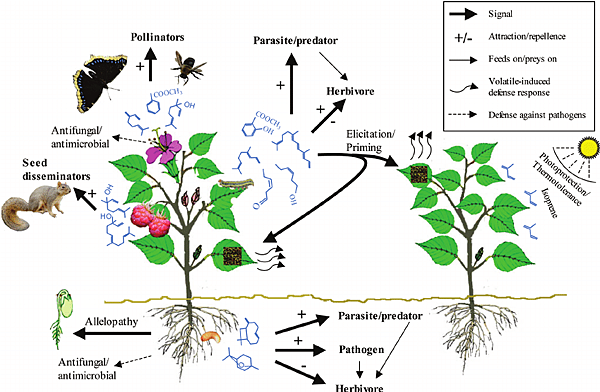 An-overview-of-volatile-mediated-plant-interactions-with-the-surrounding-environment.png
