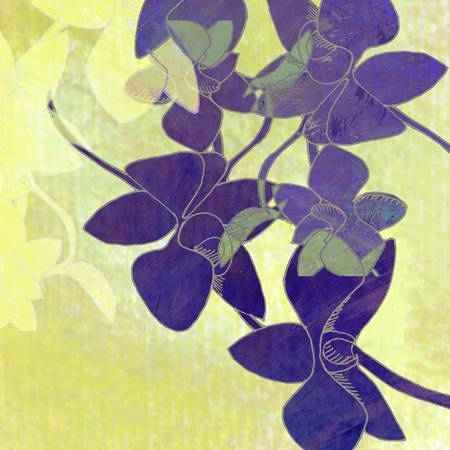 Orchid-Shadows.jpg