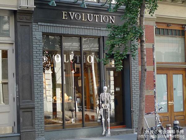 evolution01.jpg
