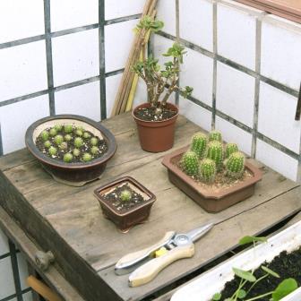 陳雪的陽台一角-小檔.jpg