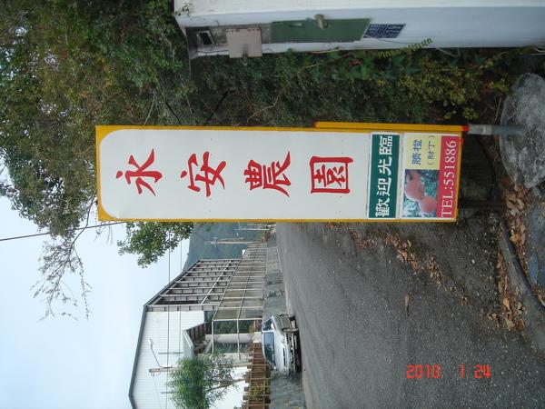 柑橘園.JPG