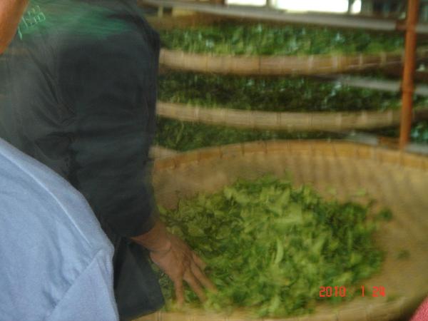 製茶過程.JPG