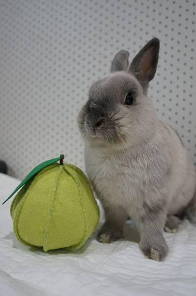 Thumper (1).JPG