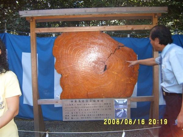 鳥居使用的木材介紹