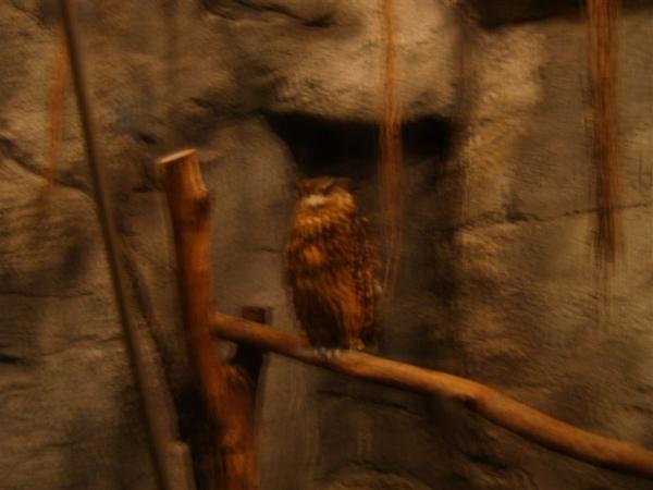 夜行動物館