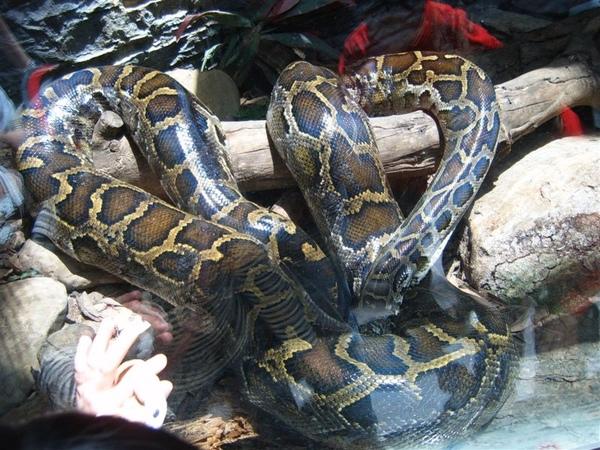 爬蟲動物館