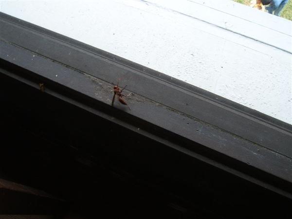 我不懂為啥他一定要拍這隻蟲子