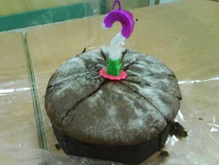 同事兼好友準備的蛋糕❤