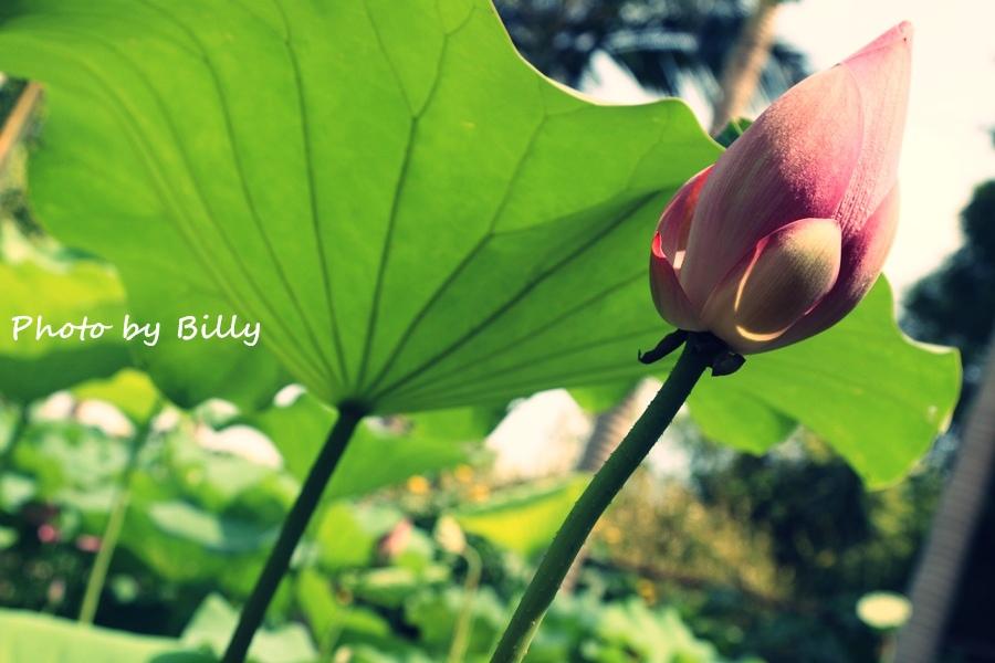 blog_20140719_27.JPG