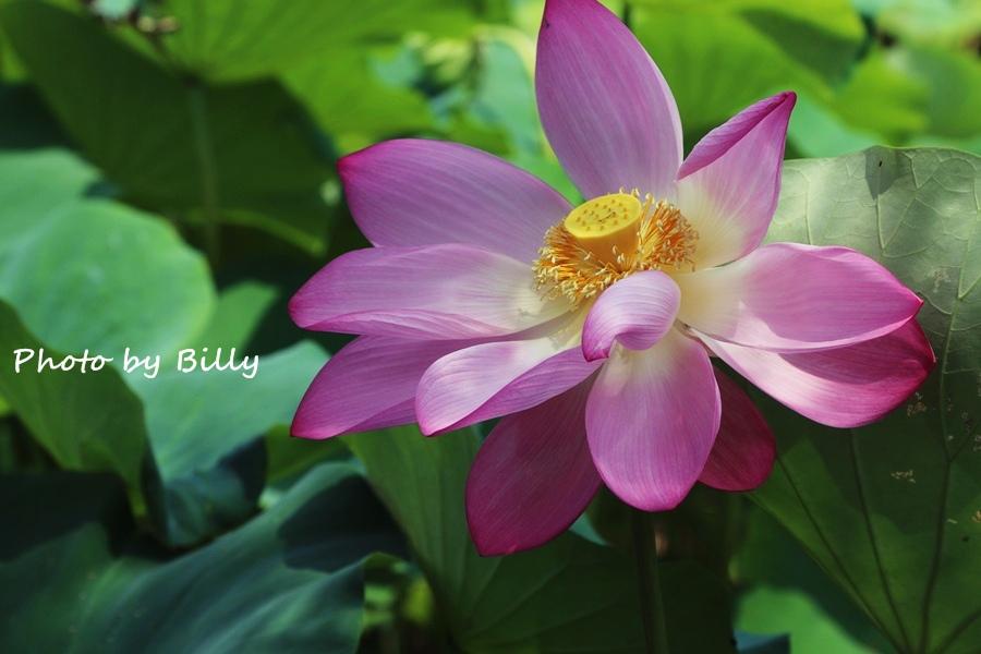 blog_20140719_29.JPG