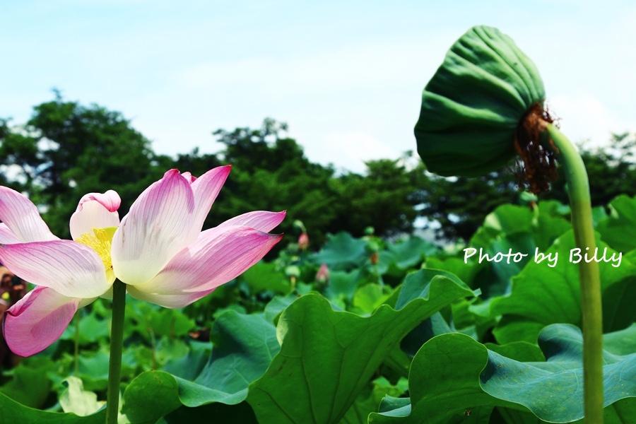 blog_20140719_36.JPG