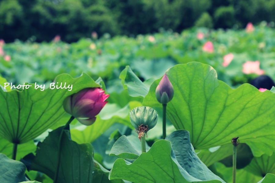 blog_20140719_38.JPG
