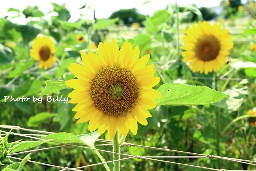 blog_20140719_41.JPG