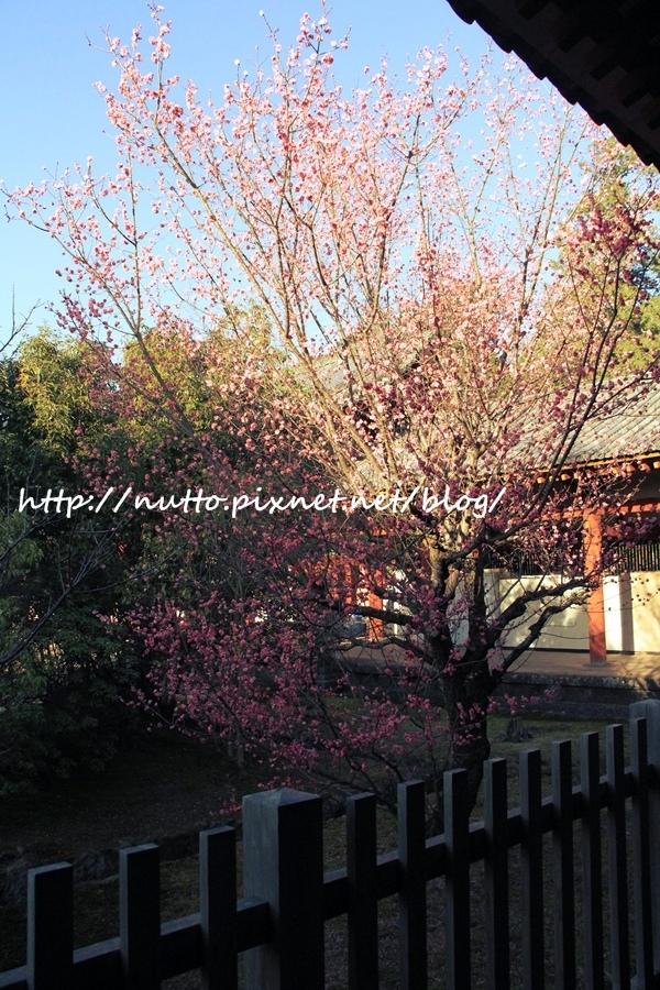 Nara_22.JPG