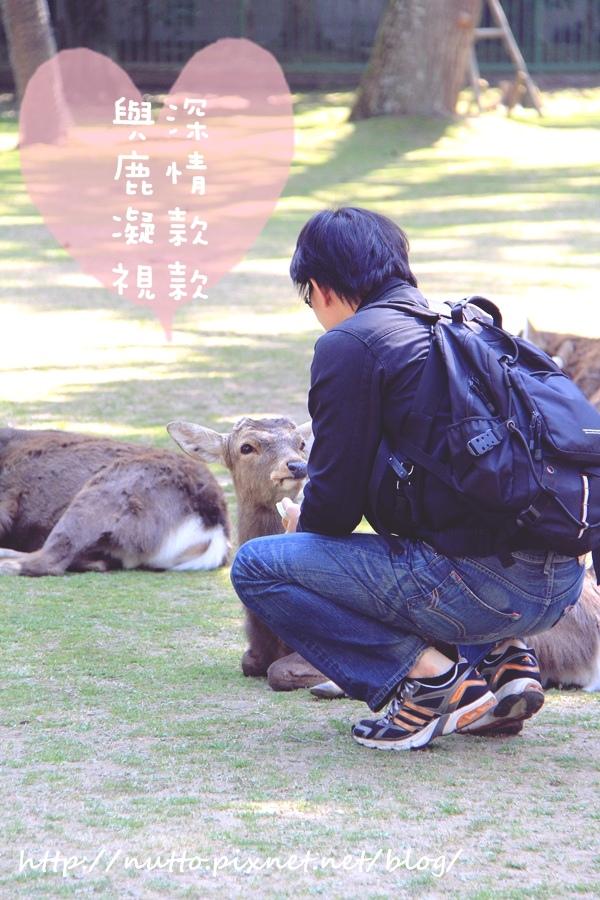 Nara_36.JPG