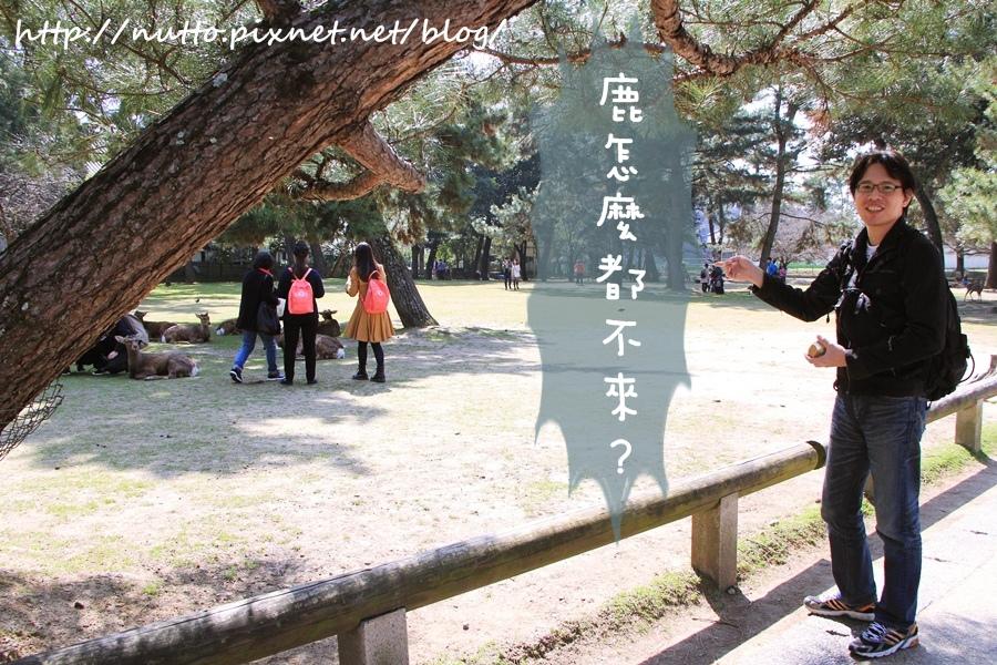 Nara_34.JPG
