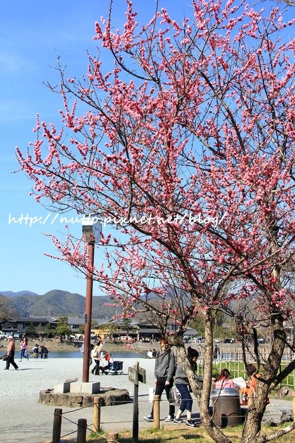 Kyoto_01_08.JPG