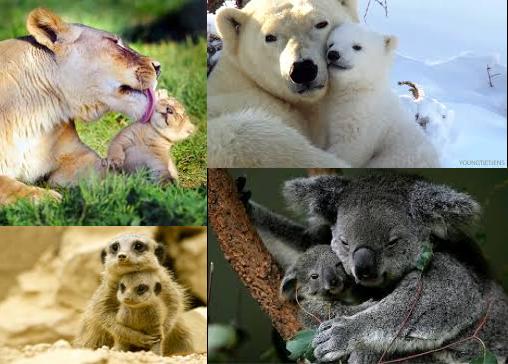 動物擁抱.png