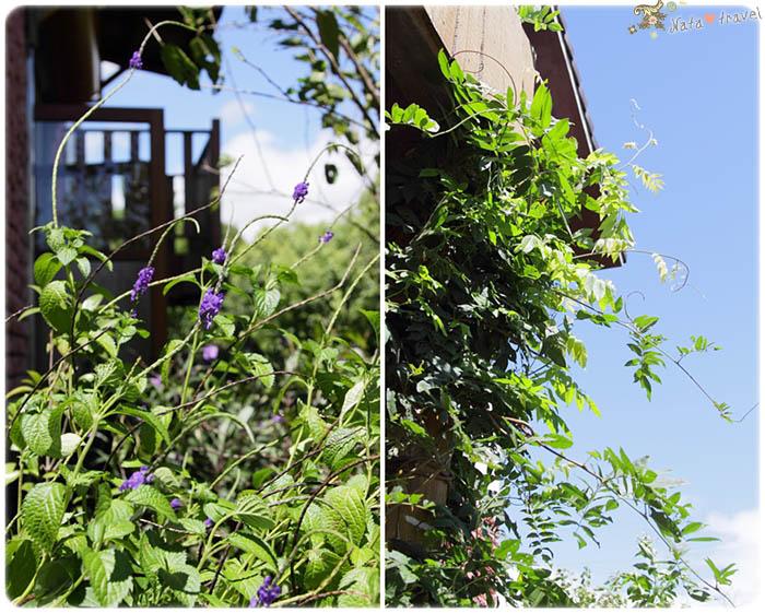 18.紫藤(左)長穗木(右)